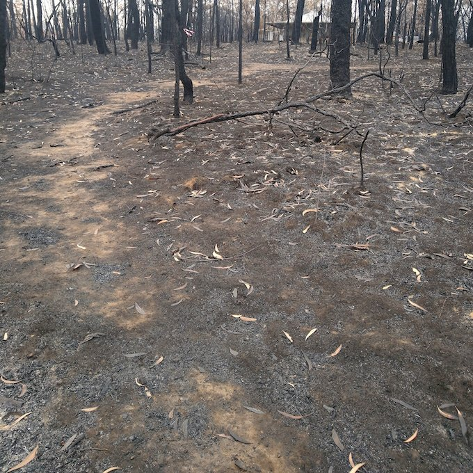 Blackened trees and burnt ground with small house in the distance