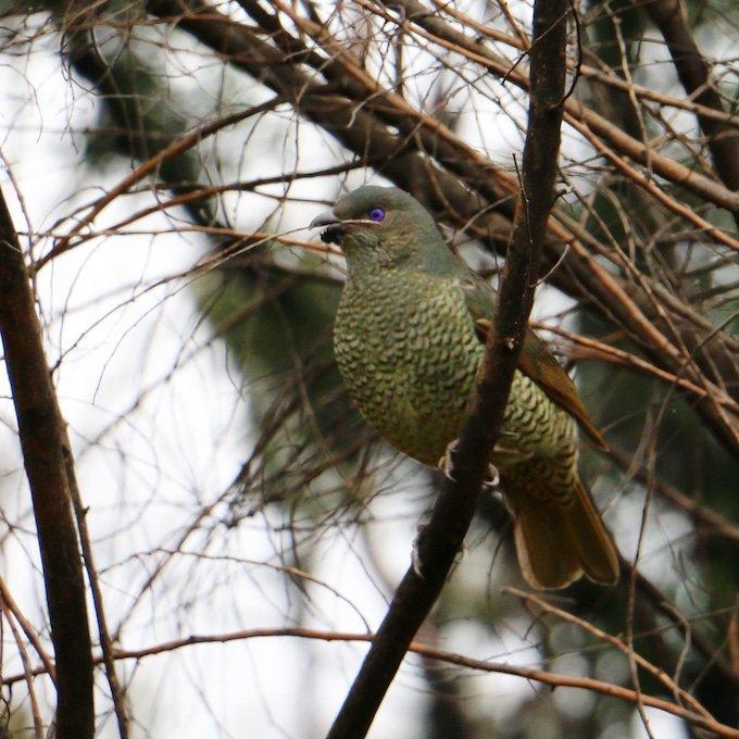 green bird in tree