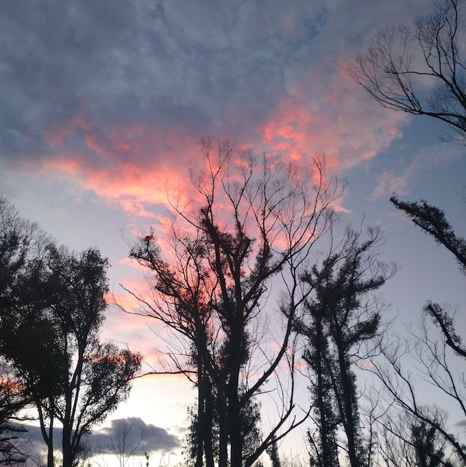 Tree silhouette with red clouds behind