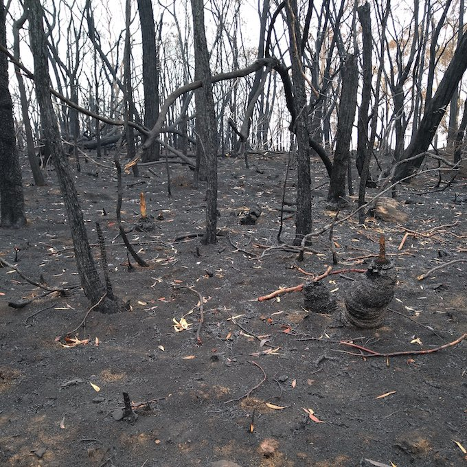 ash and charcoal covered ground and burnt tree trunks
