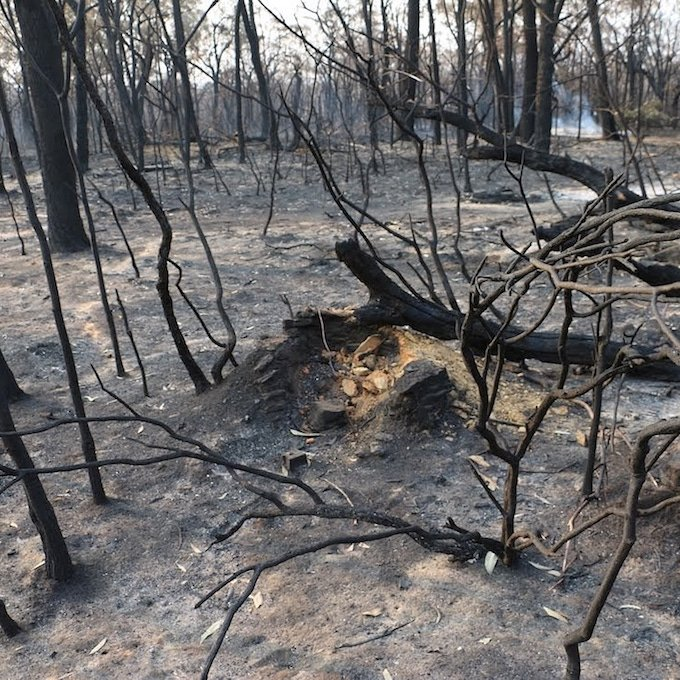 burnt ground and burnt fallen trees with smoke