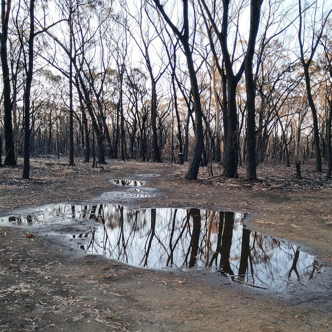 burnt trees reflected in water pools