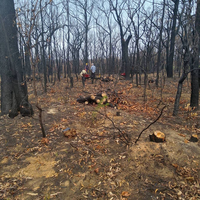 people working chopping logs amongst the burnt trees