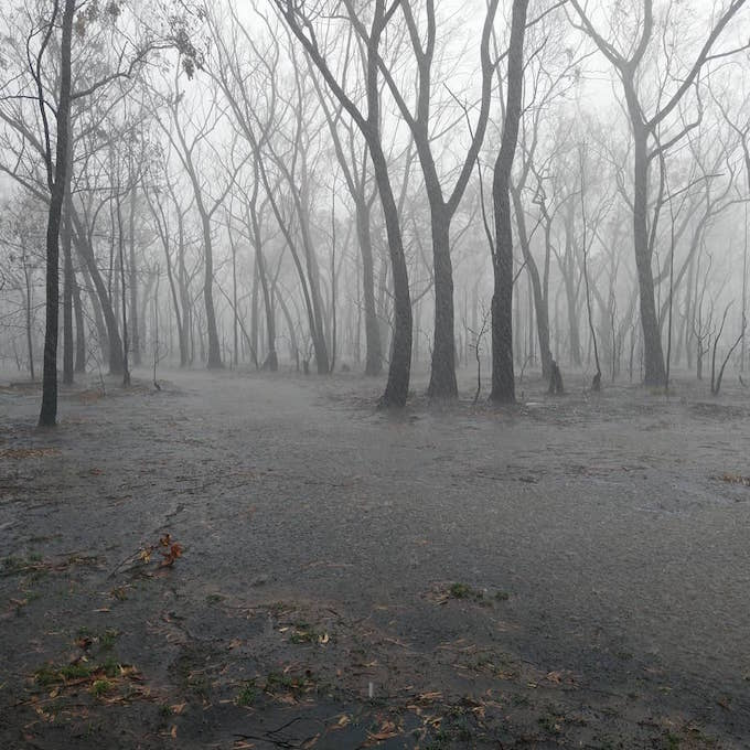 heavy rain falls and floods the ground with burnt trees