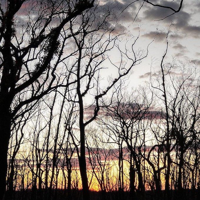 sunrise through burnt tree silhouette