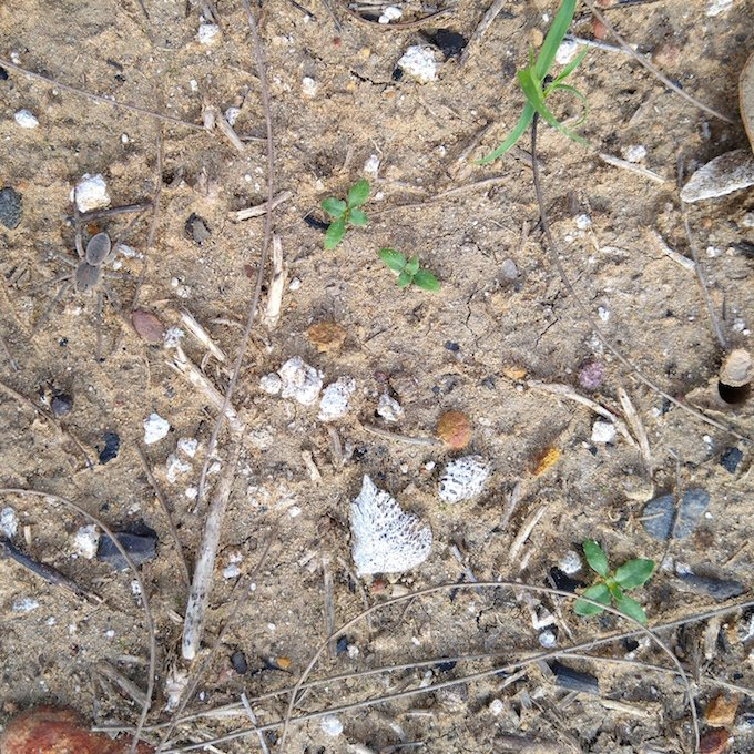 a small spider camouflaged on the ground