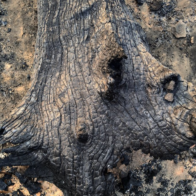 deep grooves and lines in a section of charcoaled tree