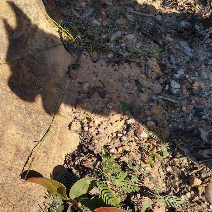 shadow dog with seedling