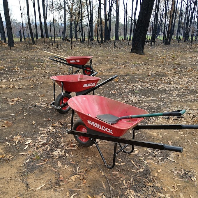 three red wheelbarrows, burnt trees in background